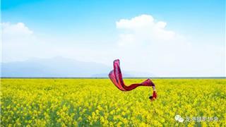 春天里 ——龙港摄影协会